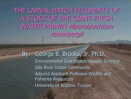 THE LARVAL HATCH FECUNDITY OF A STOCK OF THE GIANT FRESH WATER PRAWN Macrobrachium rosenbergii By. George B. Brooks, Jr. Ph.D. Environmental Coordinator/Aquatic.