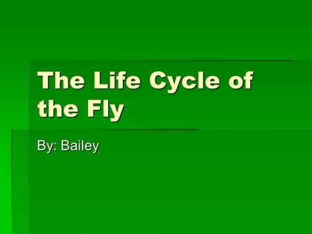 The Life Cycle of the Fly By: Bailey.  The eggs of a fly are about 2.1mm.  Are a creamy white  The eggs are piled in small groups.  The maximum temperature.