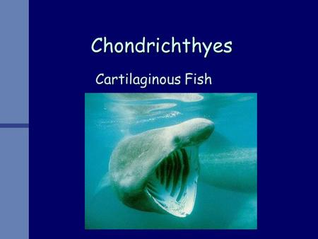 Chondrichthyes Cartilaginous Fish. Characteristics Endoskeleton entirely cartilaginousEndoskeleton entirely cartilaginous Fusiform BodyFusiform Body Mouth.