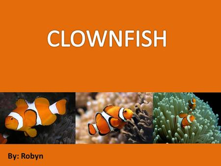By: Robyn. The clownfish is a brightly colored omnivorous fish found in the Pacific and Indian Oceans. The coloration, resembling the bright face paint.
