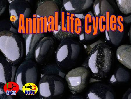 Animal Life Cycles BACK NEXT.