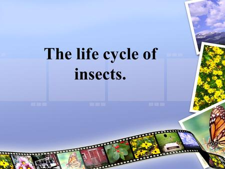 The life cycle of insects.