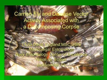 Carrion Fly and Disease Vector Activity Associated with a Decomposing Corpse LTJG David England,MSC,USN Medicolegal Entomology Navy Entomology Center of.