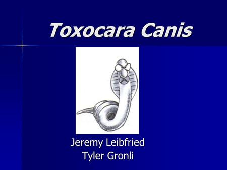 Toxocara Canis Toxocara Canis Jeremy Leibfried Tyler Gronli.