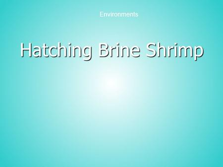 Hatching Brine Shrimp Environments. Purpose Observe and compare the hatching of brine shrimp eggs in four salt concentrations Organize data from an experiment.
