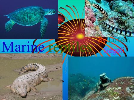 Marine reptiles By Lotem Segoli. Contents Turtles 3 Crocodile 9 Sea Snakes Marine Iguanas.