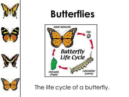 Butterflies The life cycle of a butterfly.. Video of Butterfly Life Cycle