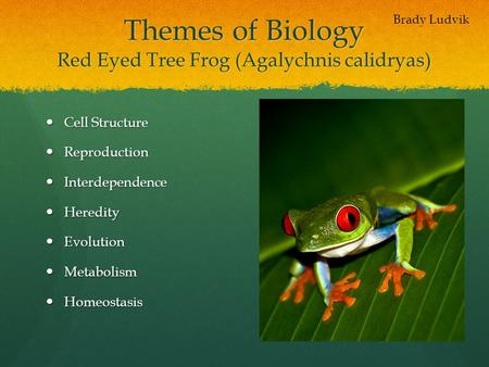 Themes of Biology Red Eyed Tree Frog (Agalychnis calidryas)