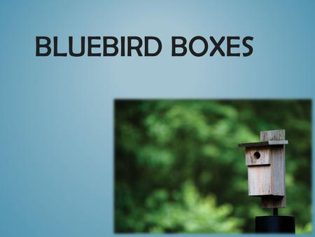BLUEBIRD BOXES. The Eastern Bluebird: Cavity nesters Perchers- hunt for insects from above Will eat fruits/nuts in the winter Eastern bluebirds can.