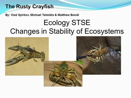 The Rusty Crayfish By: Vlad Spirkov, Michael Tsimidis & Matthew Bondi Ecology STSE Changes in Stability of Ecosystems.