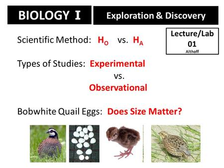 BIOLOGY I Exploration & Discovery Scientific Method: H O vs. H A Types of Studies: Experimental vs. Observational Bobwhite Quail Eggs: Does Size Matter?