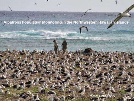 Albatross Population Monitoring in the Northwestern Hawaiian Islands Photo: Pete Leary.