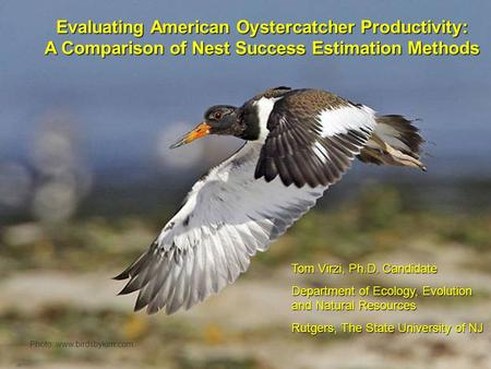 Title Page Evaluating American Oystercatcher Productivity: A Comparison of Nest Success Estimation Methods Photo: www.birdsbykim.com Tom Virzi, Ph.D. Candidate.