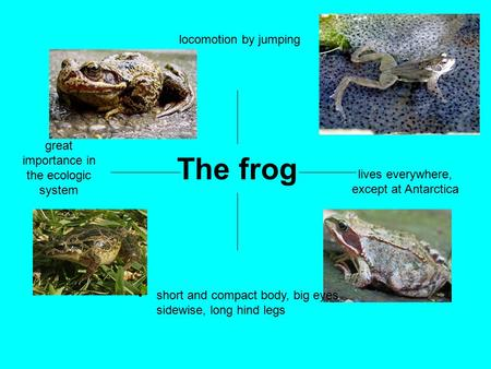 The frog great importance in the ecologic system locomotion by jumping lives everywhere, except at Antarctica short and compact body, big eyes sidewise,