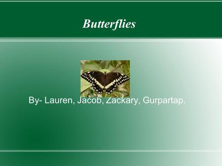Butterflies By- Lauren, Jacob, Zackary, Gurpartap.