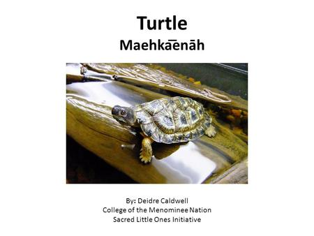 Turtle Maehka͞enāh By: Deidre Caldwell College of the Menominee Nation Sacred Little Ones Initiative.