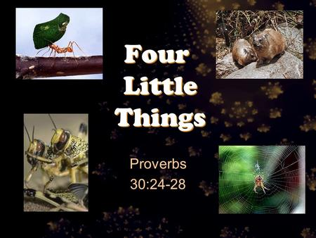 Four Little Things Proverbs 30:24-28. Proverbs 30:24-28 There are four things which are little on the earth, But they are exceedingly wise: 25 The ants.