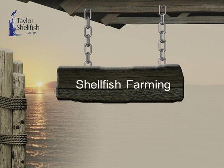 "Shellfish Farming. Shellfish Farming ""Our History"""