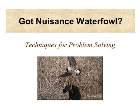 Got Nuisance Waterfowl? Techniques for Problem Solving.