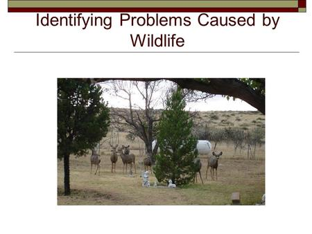 Identifying Problems Caused by Wildlife. Next Generation Wildlife/Common Core Standards Addressed!  HS ‐ LS2 ‐ 6. Evaluate the claims, evidence, and.