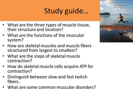Study guide… What are the three types of muscle tissue, their structure and location? What are the functions of the muscular system? How are skeletal muscles.