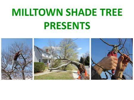 "Pruning Trees to help prevent Storm Damage PRIMARY RESOURCE: ""Some Illustrations, excerpts, Power Points and photos are by Edward F. GilmanPhD, Professor,"