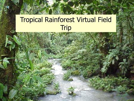 Tropical Rainforest Virtual Field Trip What is a rainforest? A Rainforest can be described as a tall, dense jungle. The reason it is called a rain