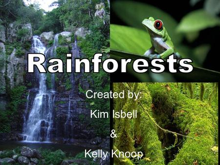 Created by: Kim Isbell & Kelly Knoop. What is a Rainforest? Tropical rainforests are forests with tall trees, warm climate, and lots of rain. In some.