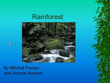 Rainforest By Mitchell Pampu and Victoria Hudson.