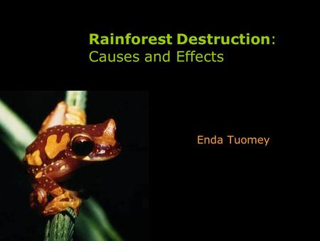 Rainforest Destruction: Causes and Effects Enda Tuomey.