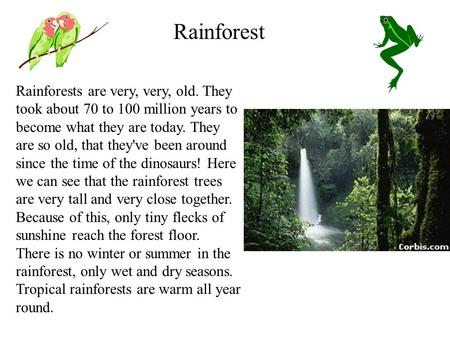 Rainforests are very, very, old. They took about 70 to 100 million years to become what they are today. They are so old, that they've been around since.