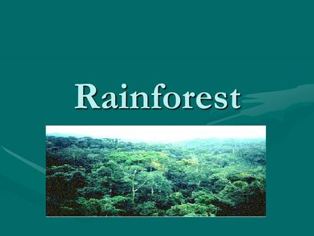 Rainforest. Rainforest Facts Rainforests only cover 2% of the world but the rainforests hold 50% of the worlds trees.Rainforests only cover 2% of the.