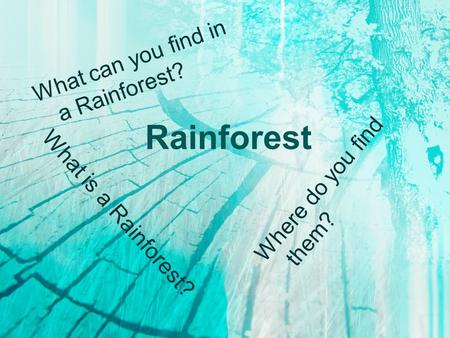 Rainforest What is a Rainforest? Where do you find them? What can you find in a Rainforest?