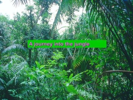 A journey into the jungle YaraSaraRoshan Learning outcomes  To define rainforests  To identify the ecosystem in the rainforests.  To talk about the.