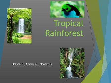 Tropical Rainforest Carson D., Aaroon O., Cooper S.