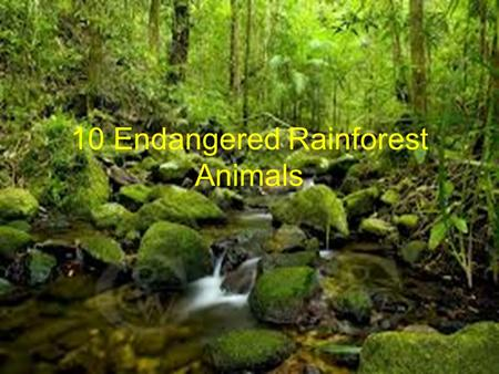 10 Endangered Rainforest Animals. 10 Endangered Rainforest Animals Lists Golden Lion Tamarind Monkey Toucans Jaguar Gorilla Poison Dart Frog Lemurs Bengal.