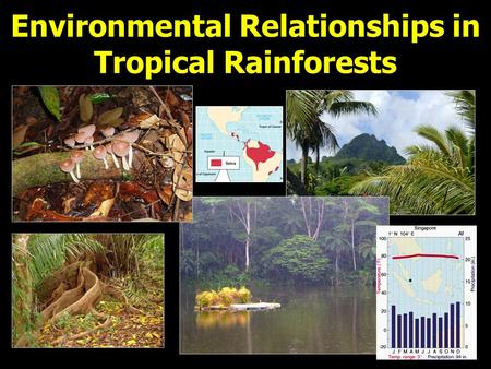 Environmental Relationships in Tropical Rainforests.