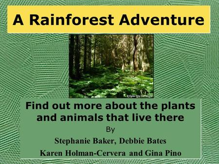 A Rainforest Adventure Find out more about the plants and animals that live there By Stephanie Baker, Debbie Bates Karen Holman-Cervera and Gina Pino.