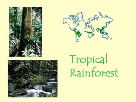Tropical Rainforest. Rainforest Location and Climate The tropical rainforest is a hot, moist biome found near Earth's equator. The world's largest tropical.