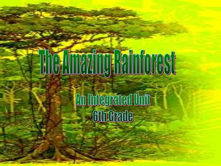 What is a rainforest? Woodland characterized by lush vegetation, comparatively high temperature, and rainfall throughout the year. The world's most.