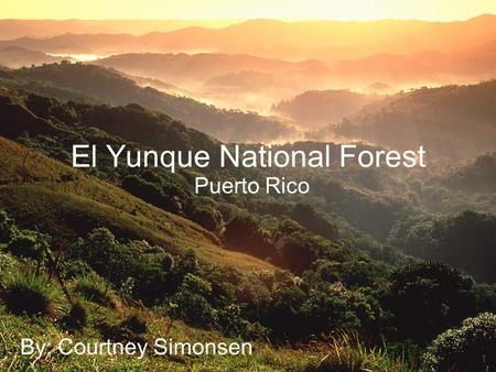El Yunque National Forest Puerto Rico By: Courtney Simonsen.