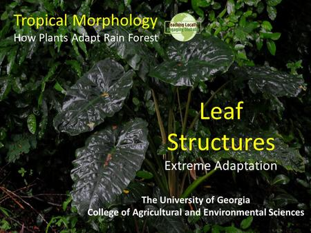 Tropical Morphology How Plants Adapt Rain Forest The University of Georgia College of Agricultural and Environmental Sciences Leaf Structures Extreme Adaptation.
