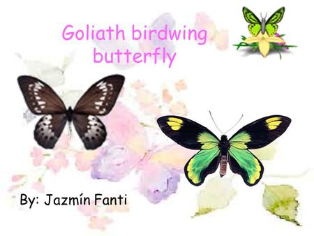 Goliath birdwing butterfly By: Jazmín Fanti The physical description… The Goliath birdwing is an insect. It is the second largest butterfly in the world.