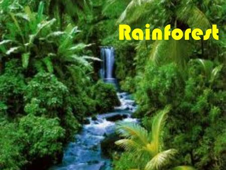 Rainforest Rainforest is located near the equator. In Rainforest is really hot and rains a lot. Rainforest has four layers they are Forest Floor, Understory.