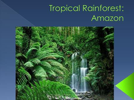 My biome is a Tropical Rainforest is a forest filled with trees and has year round warmth. Yearly rainfall is 50 to 260 inches and temperatures are usually.