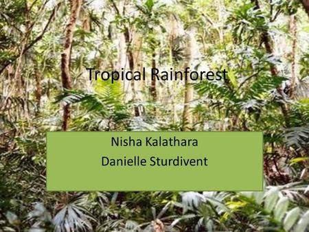 Tropical Rainforest Nisha Kalathara Danielle Sturdivent.
