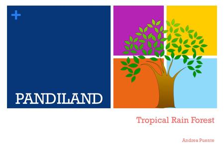 + Tropical Rain Forest Andrea Puente PANDILAND. + Producers Bannana Tree Coconut tree Bamboo.