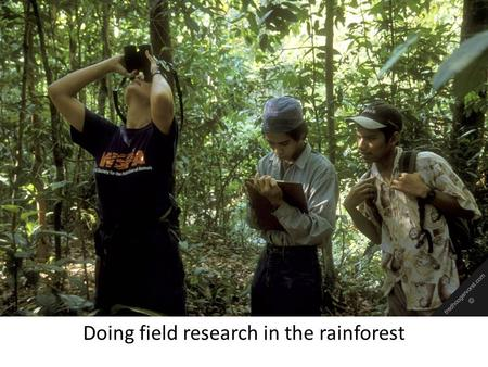 Doing field research in the rainforest