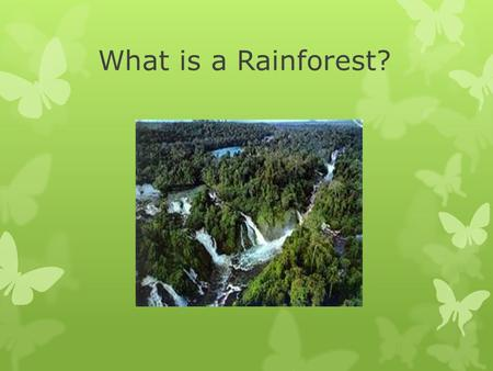 What is a Rainforest?. A rainforest is a forest of tall trees in an area with year round warm weather and lots of rain.