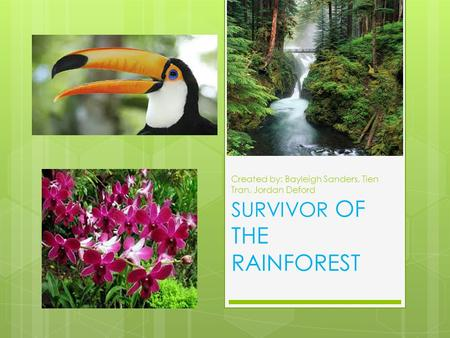 Created by: Bayleigh Sanders, Tien Tran, Jordan Deford SURVIVOR OF THE RAINFOREST.